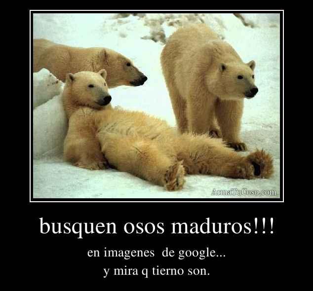 busquen osos maduros!!!